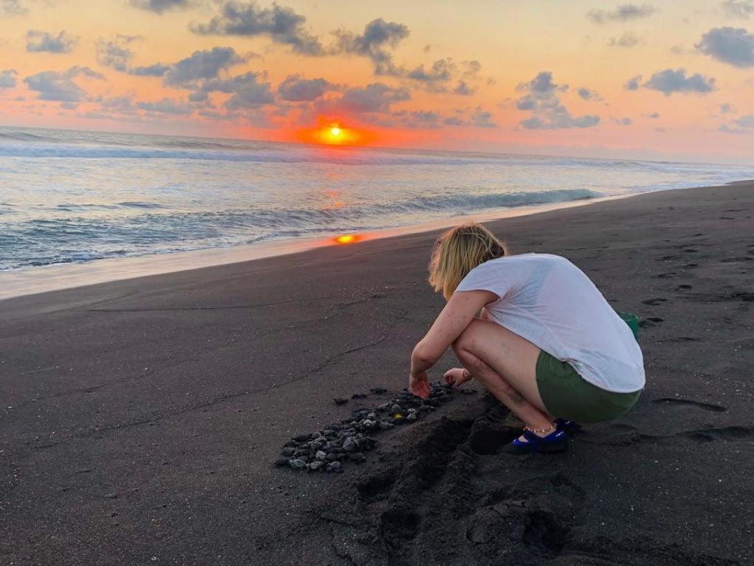 En kvinnlig volontär släpper ut utrotningshotade sköldpaddsungar på en svart sandstrand under hennes volontärresa.